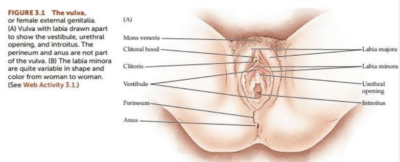 Sacra Vulva