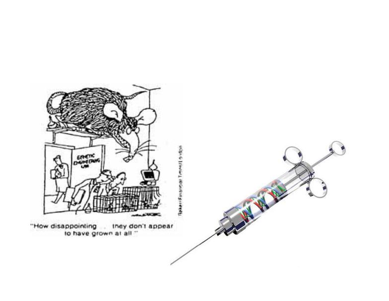Sept 14 - Genetic Engineering pdf