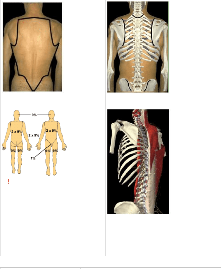 Anat30007 Lecture Notes Fall 2015 Lecture 4 Iliac Crest Lumbar