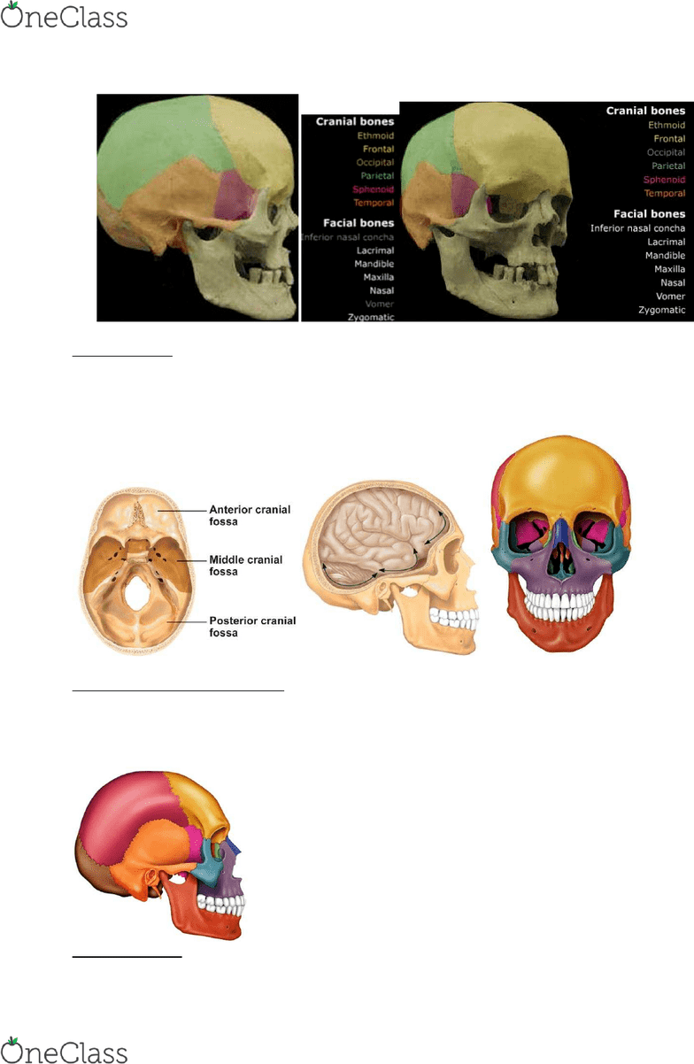 Anp 1106 Textbook Notes Winter 2015 Chapter 7 Anterior Cranial