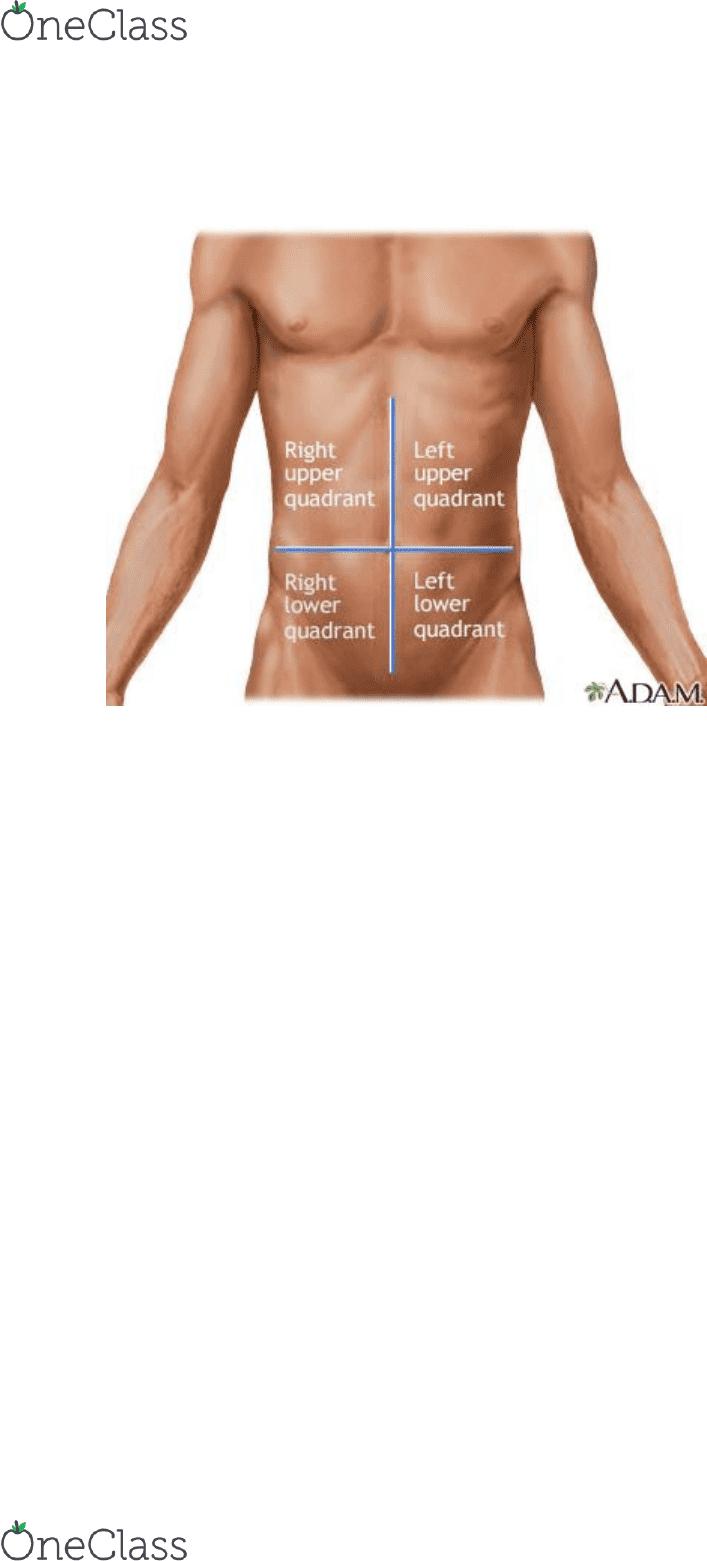 Nur 203 Textbook Notes 2017 Chapter 16 Abdominal Aorta