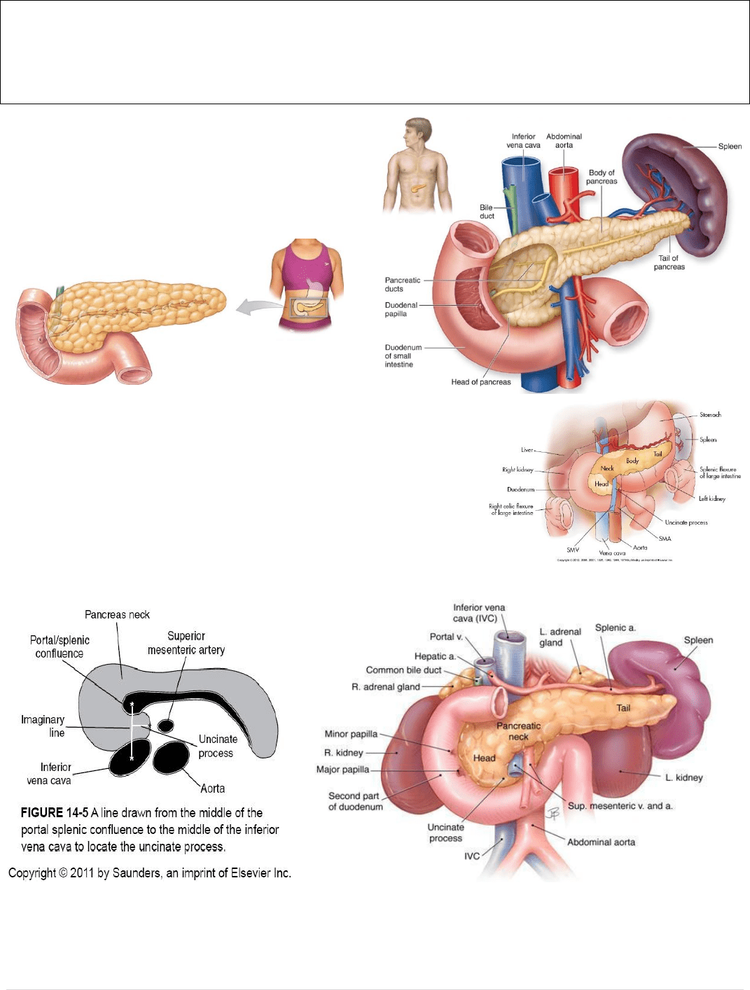 Meds12002 Lecture Notes Fall 2018 Lecture 1 Gastroduodenal
